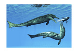 Metriorhynchus Marine Reptiles Try to Capture a Coelacanth Fish Poster