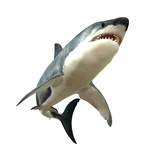 Great White Shark Premium Giclee Print