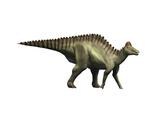 Hypacrosaurus Dinosaur Prints