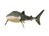 Whale Shark Art