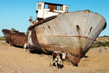 Boats in Desert around Moynaq, Muynak or Moynoq - Aral Sea or Aral Lake - Uzbekistan - Asia Photographic Print by Daniel Prudek