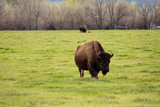 American Buffalo Photographic Print by  harpazo_hope
