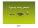 Rats d'marais - Faune poitevine Print by Sylvain Bichicchi