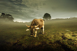 Water Buffalo Photographic Print by Photo by Sayid Budhi