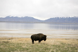 Antelope Island. Road Trip Photographic Print by John Arsenault
