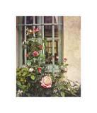 Paris Roses Giclee Print by Dawne Polis