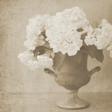 Vintage Hydrangeas Giclee Print by Shana Rae