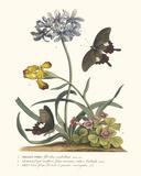 Polianthius, Oxalis und Iris Giclée-Druck von Georg Dionysius Ehret
