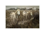 White Horses Giclee Print by David Winston