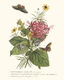 Ceratocephamus, Martynia und Narcissus Giclée-Druck von Georg Dionysius Ehret