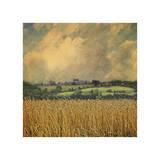 Picardy Wheat Giclee Print by Dawne Polis