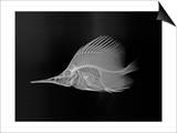 Longnose Butterflyfish Posters by Sandra J. Raredon