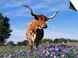 Texas Longhorn Cow, in Lupin Meadow, Texas, USA Art by Lynn M. Stone