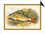 Perch Print by A.f. Lydon