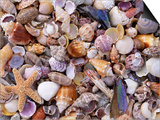 Mixed Sea Shells on Beach, Sarasata, Florida, USA Art by Lynn M. Stone
