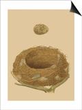 Antique Nest and Egg IV Plakater av Reverend Francis O. Morris