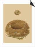 Antique Nest and Egg IV Posters by Reverend Francis O. Morris