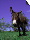 Donkey Prints by Lynn M. Stone