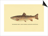 The Brook Trout Art by H.h. Leonard