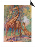 Three Giraffes Posters by Louis A. Sargent