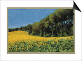Sunflowers in Perugia Prints by Helen J. Vaughn
