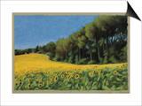 Sunflowers in Perugia Prints by Helen J. Vaughn
