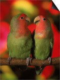 Two Parrots Perched on a Branch Stampa di Henryk T. Kaiser