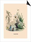 Narcisse Posters by J.J. Grandville