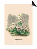 Marguerite Prints by J.J. Grandville