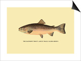 The Rainbow Trout Prints by H.h. Leonard