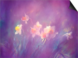 Abstract of Daffodils, Shamper's Bluff, New Brunswick, Canada Poster by Charles R. Needle