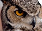 Eye of a Great Horned Owl Posters by W. Perry Conway