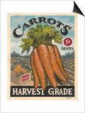 Fresh Carrots Prints by K. Tobin