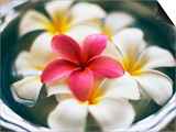 Frangipani Flowers in Bowl of Water Prints by Thomas M. Barwick