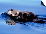 Sea Otter with Offspring Prints by Lynn M. Stone