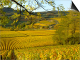 Autumn Morning in Pouilly-Fuisse Vineyards, France Prints by Lisa S. Engelbrecht