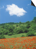 Poppy meadow in landscape Art by Rolf W. Hapke