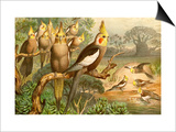 Rosy Cheeked Cockatiels or Cockatoo Posters by F.W. Kuhnert