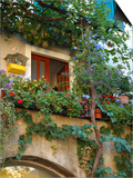 Grape Arbor and Flowers, Lake Garda, Malcesine, Italy Print by Lisa S. Engelbrecht