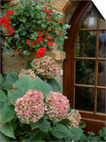 Geraniums and Hydrangea by Doorway, Chateau de Cercy, Burgundy, France Prints by Lisa S. Engelbrecht
