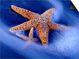 Two Starfish on Beach, Hilton Head Island, South Carolina, USA Prints by Charles R. Needle