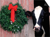Holstein Cow in Barn with Christmas Wreath, WI Art by Lynn M. Stone