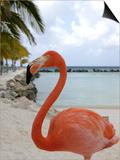Pink Flamingo on Renaissance Island, Aruba, Caribbean Poster by Lisa S. Engelbrecht
