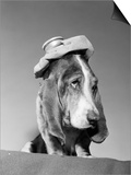 1960s Basset Hound with Ice Bag Pack on Top of His Head Sick Hang over Headache Prints by D. Corson