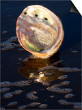 Abalone Shell on California Beach at Dawn Prints by Lynn M. Stone