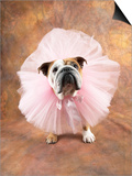Bulldog Wearing Tutu Posters by Peter M. Fisher