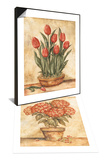 Potted Red Hydrangea & Potted Tulips Set Print by Tina Chaden