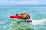 Dog Frisbee Photographic Print by Javier Brosch