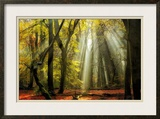 Yellow Leaves Rays Prints by Lars Van de Goor