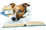 Dog and Books Posters by Javier Brosch